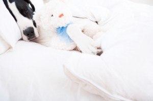 dog sleeps on bed