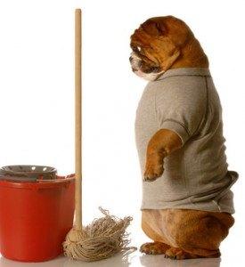 housetraining a dog