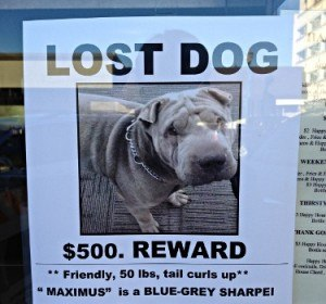 lost dog flier