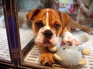 banning pet stores
