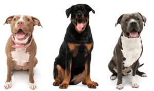 President Obama speaks against breed restrictions
