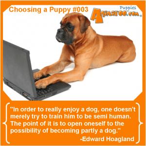 Choosig a Puppy