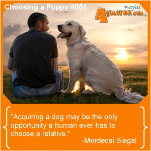 Choosing a Puppy 001
