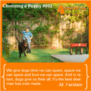 Choosing a Puppy - Lifestyle