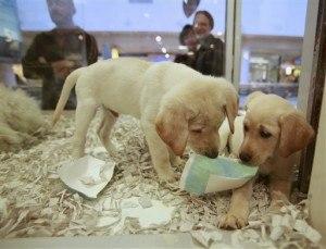 banning pet stores