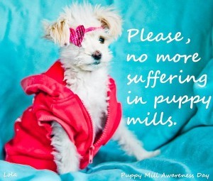 Lolas Legacy to end puppy mills