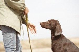 Retraining Family Dogs Becomes a Career