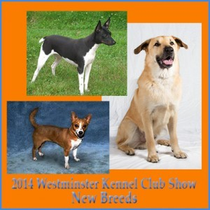 2014 Westminster Kennel Club Dog Show Additions