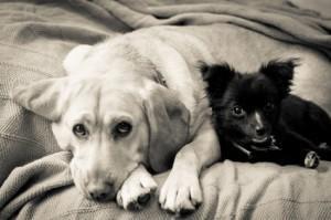Puppy Mill Bill Means Closer Watch