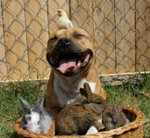 Breed Specific Legislation is Not Fair