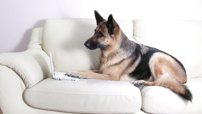 German shepherd intelligence ranking